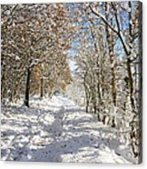 Snowpath Acrylic Print