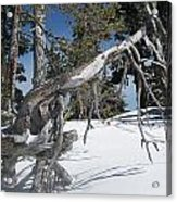 Snowshoeing On A Clear Day Acrylic Print