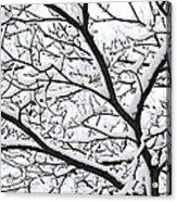 Snowy Branch Acrylic Print