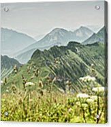 Snowy Mountains And Grassy Fields Acrylic Print
