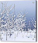 Snowy Trees Acrylic Print by Elena Elisseeva