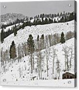 Snowy Wilderness Acrylic Print