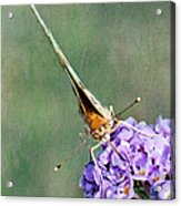 So What Butterfly Acrylic Print