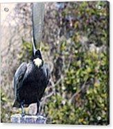 Soapbox - Pelican Acrylic Print