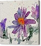 Soft Asters Acrylic Print