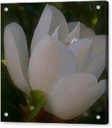 Soft Bloom Acrylic Print
