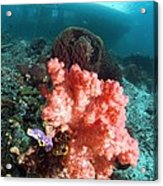 Soft Coral And Sea Squirts Acrylic Print