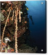 Soft Coral Reef, Indonesia Acrylic Print