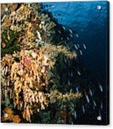 Soft Coral Seascape And Rainbow Acrylic Print