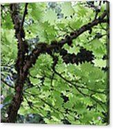 Soft Green Leaves Acrylic Print