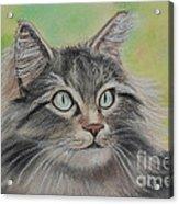 Soft Kitty Acrylic Print