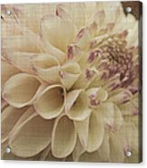 Soft Lady Acrylic Print by Terrie Taylor