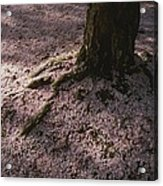 Soft Light On A Pink Carpet Of Fallen Acrylic Print