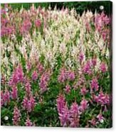 Soft Meadow  Acrylic Print