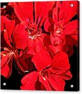 Soft Petals Cascade Acrylic Print