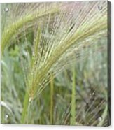 Soft Rain On Grass Acrylic Print