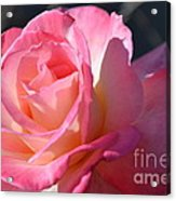 Soft Rose Acrylic Print