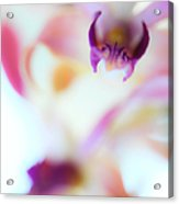 Soft Seduction. Orchids Acrylic Print