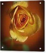 Soft Yellow Rose Orange Background Acrylic Print by M K  Miller