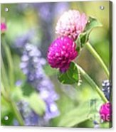Softness In The Garden Acrylic Print