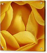 Softness In Yellows Acrylic Print