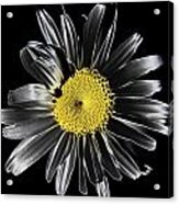 Solarized Daisy Acrylic Print
