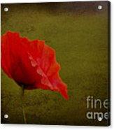 Solitary Poppy. Acrylic Print