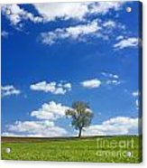 Solitary Tree In Green Meadow Acrylic Print by Bernard Jaubert
