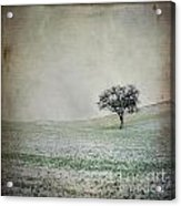 Solitary Tree In Winter. Auvergne. France. Europe Acrylic Print