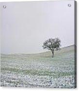 Solitary Tree In Winter Acrylic Print by Bernard Jaubert