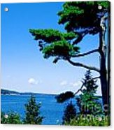 Somes Sound  Acrylic Print