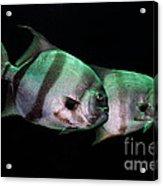 Something Fishy This Way Comes Acrylic Print