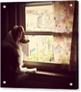 Somewhere In The Distance...a Puppy Acrylic Print by Katie Cupcakes
