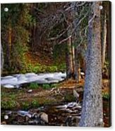 Somewhere In The Forest Acrylic Print