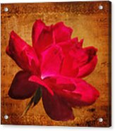 Song Of The Last Rose Acrylic Print