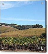 Sonoma Vineyards - Sonoma California - 5d19309 Acrylic Print