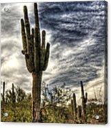 Sonoran Desert Iv Acrylic Print