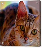 Sookie All Grown Up Acrylic Print