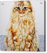 Sophie's Toro Acrylic Print