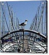 South Beach Seagull Acrylic Print