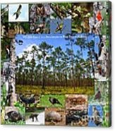 Southeastern Pine Forest Wildlife Poster Acrylic Print