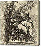 Southern Comfort Sepia Acrylic Print