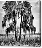 Southern In Black And White Acrylic Print