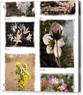 Southwest Wildflower Collection #2 Acrylic Print