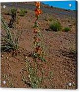 Southwest Wildflower Acrylic Print