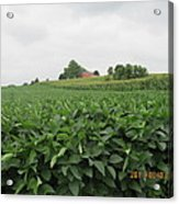 Soy Beans And Red Barn Acrylic Print