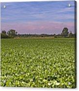 Soybean Field Acrylic Print by Paolo Negri