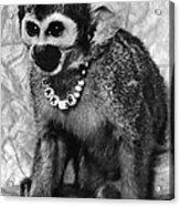 Space Monkey: Baker, 1979 Acrylic Print