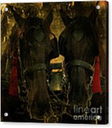 Spanish Carriage Horses Acrylic Print by Lee Dos Santos