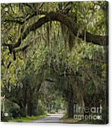 Spanish Moss - D002156 Acrylic Print